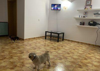 Hotelcanin - Pethotel Timisoara 19